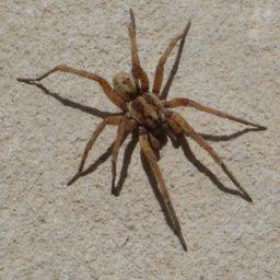 Уничтожение пауков в Губкинском